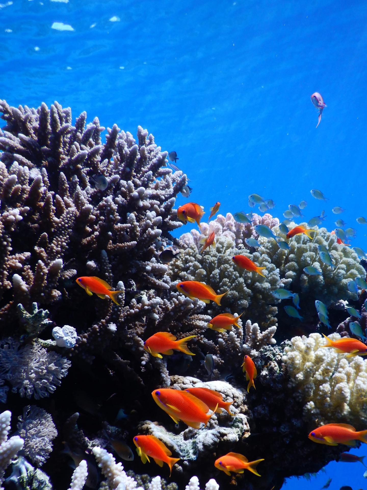 Research grants awarded to regional scientists studying the red sea's coral reef